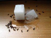 муравьи в доме как избавиться
