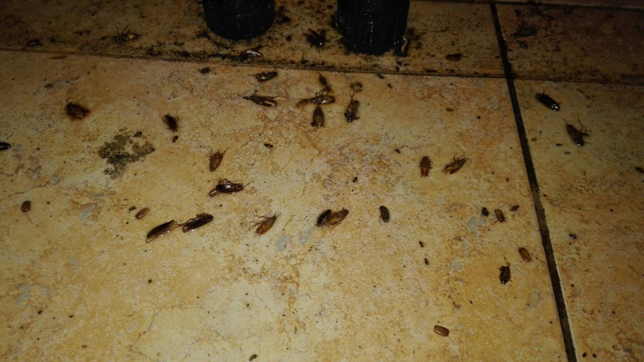 Результат уничтожения тараканов холодным туманом