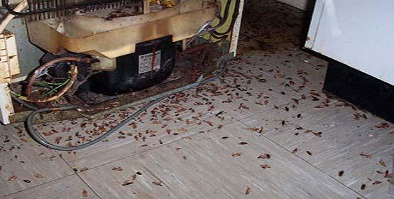 Уничтожение тараканов в квартире специализированные службы с гарантией