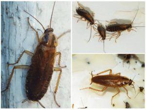Дезинсекция от тараканов в Подольске