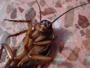 Дезинсекция от тараканов в Жуковском