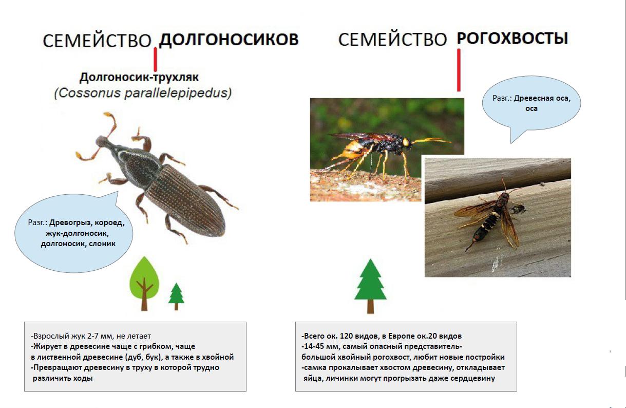 Как бороться с жуками в квартире