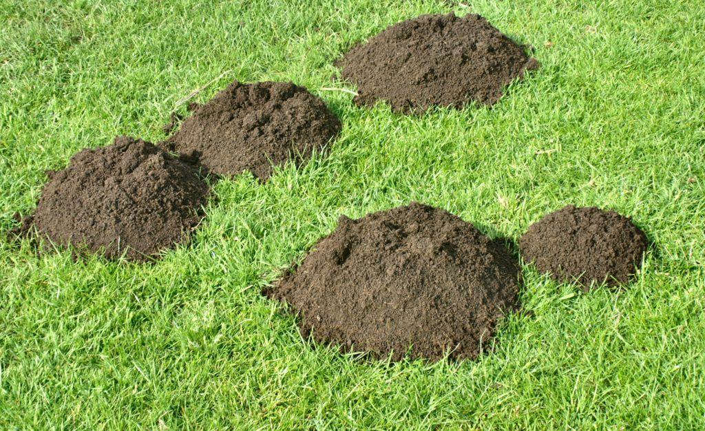 Как вывести кротов с участка и огорода. Обзор методов