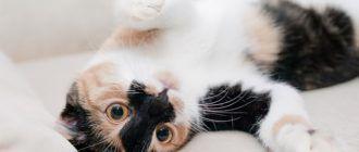 Как навсегда избавиться от запаха кошачьей мочи в квартире