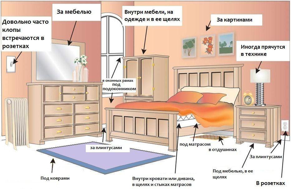 Специализированная служба по уничтожению клопов в Москве
