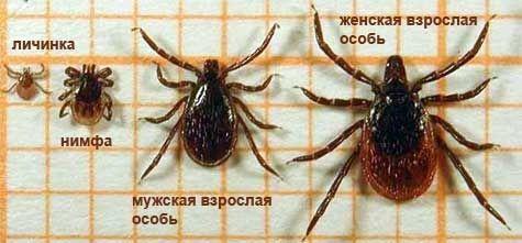Акарицидная обработка от клещей территории и участков в Москве. Цены