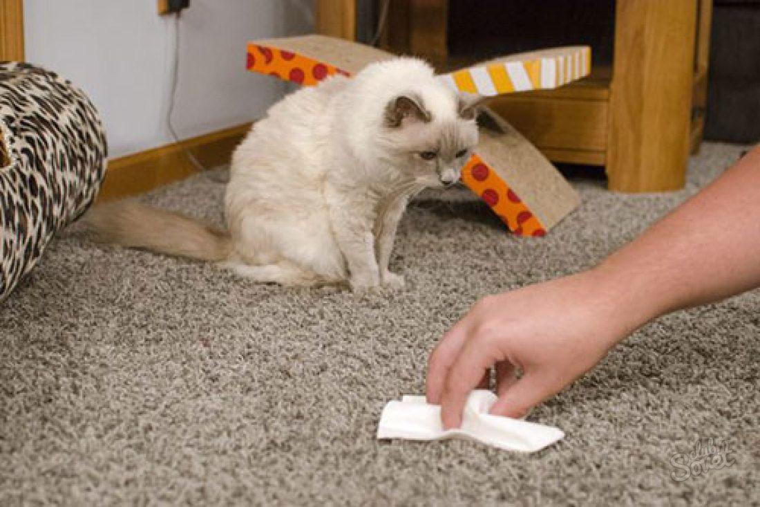 кошка упорно ходит и в лоток и на пол