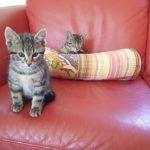 Удаление запаха кошачьей мочи с мебели