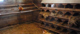 Дезинфекция курятников и птицеферм
