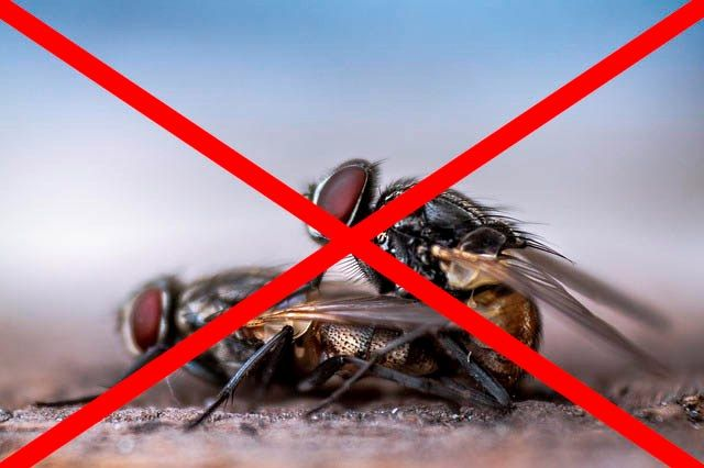 Профессиональное уничтожение мух в Москве с гарантией
