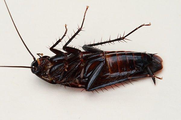 Тараканы в кафе, ресторане как избавиться?