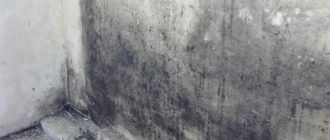 Как избавиться от плесени на стене