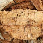 Разновидности гнили древесины