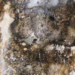 СВЧ метод от плесени и грибка
