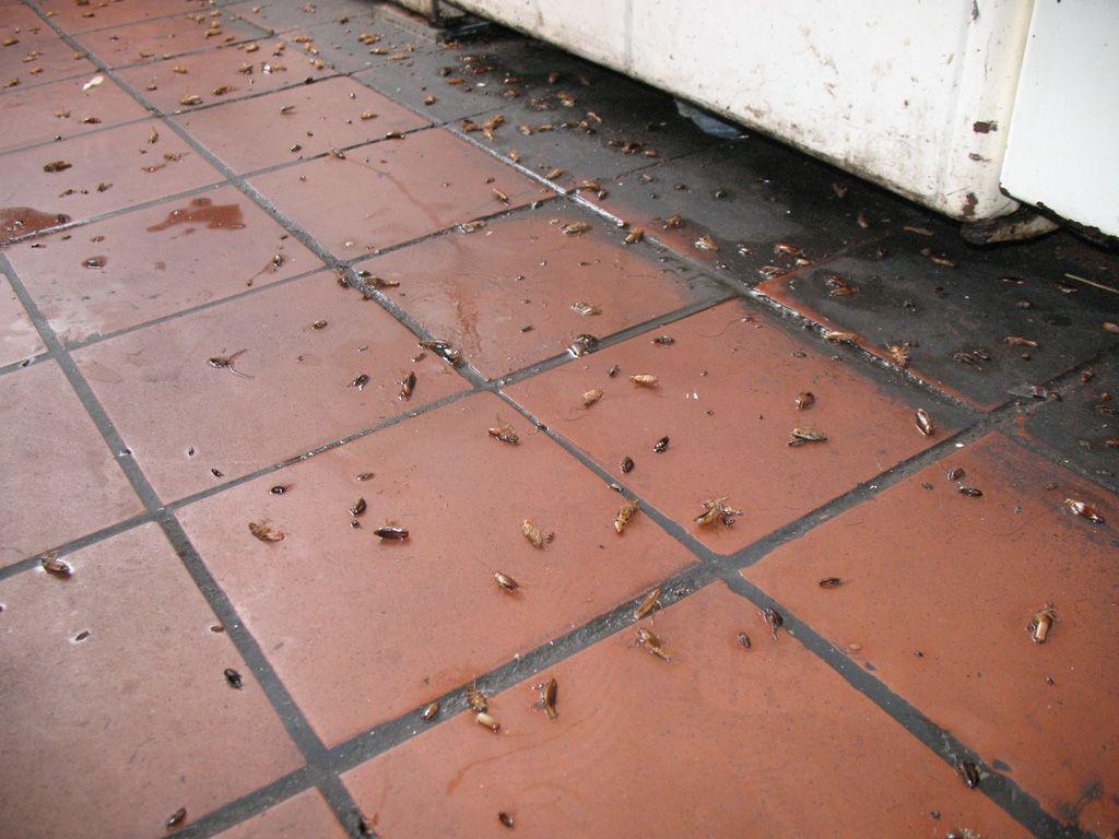 Морить тараканов в квартире в Москве