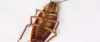Травление тараканов в Щербинке