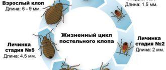 Травля клопов в Щербинке
