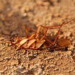 Уничтожение тараканов в Лыткарино